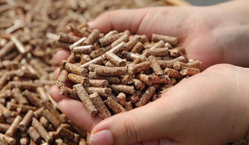 granulés de bois
